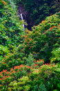 Waterfall in jungle of Hawaii Royalty Free Stock Photo