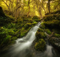 Waterfall on mountain river with moss on rocks