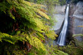 Waterfall in new zealand tall jungle Stock Photo