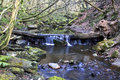 Waterfall over fallen tree may beck river near falling foss north yorkshire moors Royalty Free Stock Images