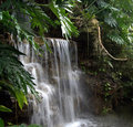 Waterfall  secluded beauty Royalty Free Stock Photography
