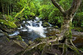 Waterfall small cascade flowing in the green forest Royalty Free Stock Photos