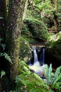 Waterfall small rainforest creek water Royalty Free Stock Image