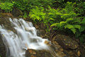 Waterfall in summer near fern Stock Photos