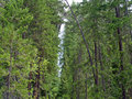Waterfall surrounded by wooded wilderness beautiful mountain Stock Photography