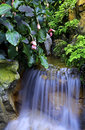 Waterfall in tropical garden Royalty Free Stock Photo