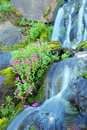 Waterfall And Wild Flowers