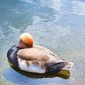 Waterfowl bird in a water pond composition Stock Photo