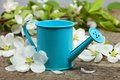 The watering can Royalty Free Stock Photo