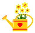 Watering can and daffodils isolated on white background Stock Photos