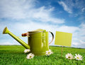 Watering can with daisies Royalty Free Stock Photo