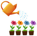 Watering can and flowers in garden Royalty Free Stock Photo