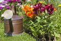 Watering can in front of colorful lilies old copper standing beautiful colored the flower bed Royalty Free Stock Images