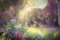 Watering can pouring water over flowers Royalty Free Stock Photo