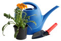 Watering can shovel flower Royalty Free Stock Images
