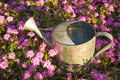 Watering can under the sunshine a warm spring Royalty Free Stock Photography