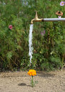 Watering flower Royalty Free Stock Photo