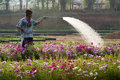 Watering flowerbeds loei thailand feb an unidentified man uses a garden hose to water flowers for sale on feb in loei thailand Stock Photography