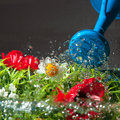 Watering flowers colorful with blue can Royalty Free Stock Images