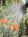 Watering flowers garden Royalty Free Stock Photos