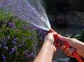 Watering the garden on a summer evening Stock Photo