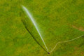 Watering the green lawn in summer getting watered by a sprinkler Stock Images