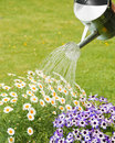 Watering Summer Flowers Royalty Free Stock Image