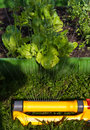 Watering vegetable garden Stock Photography