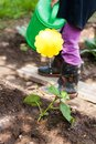 Little Girl Water Watering Can Cucumber In Garden. Royalty Free Stock Photo