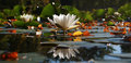 Waterlily flower reflesction water nature Royalty Free Stock Photo