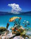 Waterline with cloud and marine life in the sea underwater colorful tropical above surface blue sky a caribbean Royalty Free Stock Photo