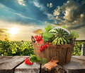 Watermelon in a basket Royalty Free Stock Photo