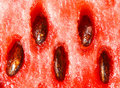 Watermelon macro Royalty Free Stock Photography