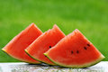 Watermelon slices freshly cut kept in the garden to relish on a hot summer day Royalty Free Stock Photography