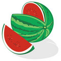Watermelon + vector Stock Image
