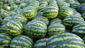 Watermelons Stock Photography