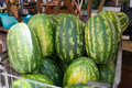 Watermelons ripe big on market Royalty Free Stock Image