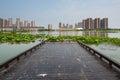 Waterscape platform this photo was taken in lotus lake park nanjing city china photo taken on jul th Stock Photos