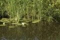 Waterside the in the national park de wieden Stock Photo
