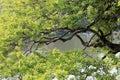 Waterside tree at county park amoy city china Royalty Free Stock Photography