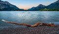 Waterton Lakes Log Royalty Free Stock Image