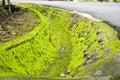 Waterway moisture with moss lichen Stock Photography