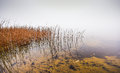 Watery grass to nowhere - thick fog on the Ottawa River. Royalty Free Stock Photo