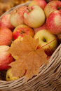 Wattled basket with apples among maple leaves Royalty Free Stock Photo
