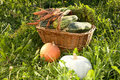 Wattled basket with vegetable marrows on a  grass Stock Photos