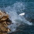 Wave Splashing a Snow Egret on the Rocks Royalty Free Stock Photo