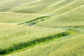Waves of grass in tuscany wheat and green the rolling hills val d orcia italy Royalty Free Stock Photos