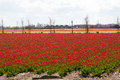 Waves Of Tulip Fields Near Keu...