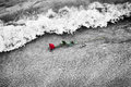 Waves washing away a red rose from the beach. Color against black and white. Love Royalty Free Stock Photo