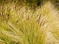 Wavy Grasses Royalty Free Stock Photos
